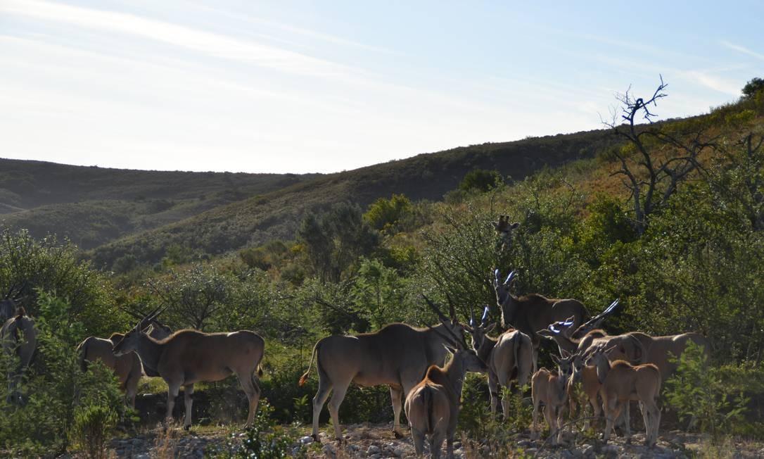 Safári nas montanhas da Garden Route em Gondwana Foto: Mari Campos / Especial para O GLOBO