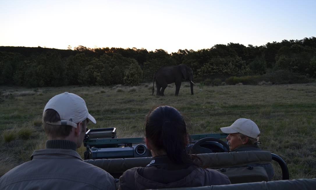 Elefantes na reserva de Gondwana Foto: Mari Campos / Especial O Globo