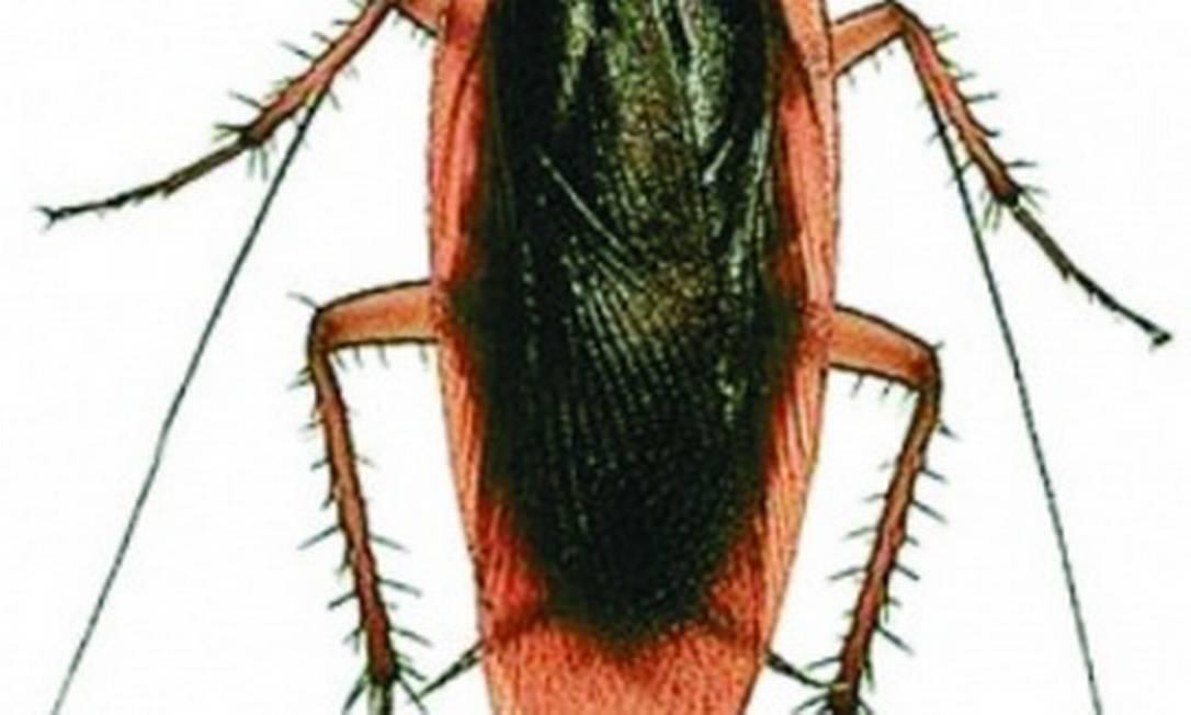 Regras da Anvisa determinam limites de insetos e outras matérias estranhas em alimentos e bebidas Foto: O GLOBO