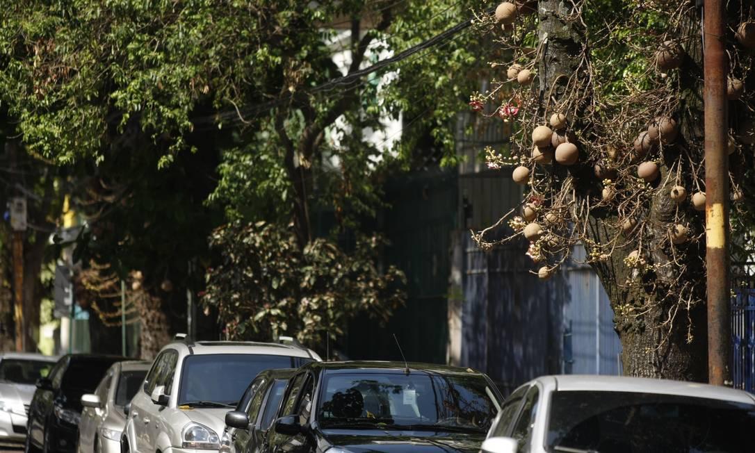 Susto. O para-brisa do carro de Théo (à esquerda) foi atingido em cheio por um fruto de abricó-de-macaco. Ao longo da Rua Visconde de Caravelas, há cerca de 40 árvores do tipo Foto: Guilherme Leporace / Agência O Globo