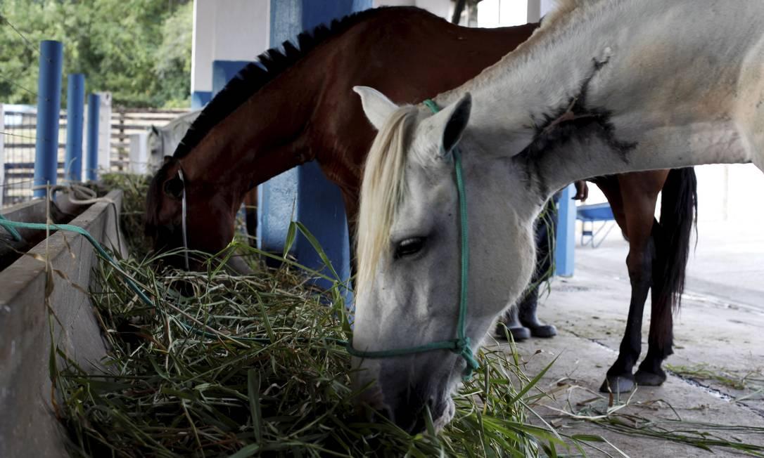 Maus-tratos. Cavalos, muitos deles apreendidos em Paquetá, também são acolhidos Foto: Agência O Globo / Gustavo Stephan