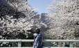 Mulher observa as cerejeiras em flor em Tóquio, no início da temporada de 2014