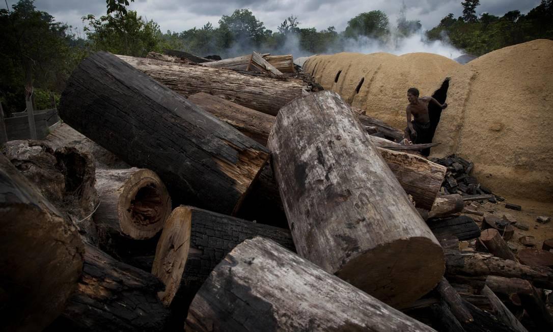 Extração ilegal de madeira em Goianésia (GO) Foto: / MARIZILDA CRUPPE/AFP