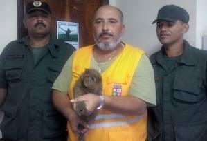 Filhote de capivara foi encontrado próximo ao acessos à Ponte Rio-Niterói - Foto: Divulgação