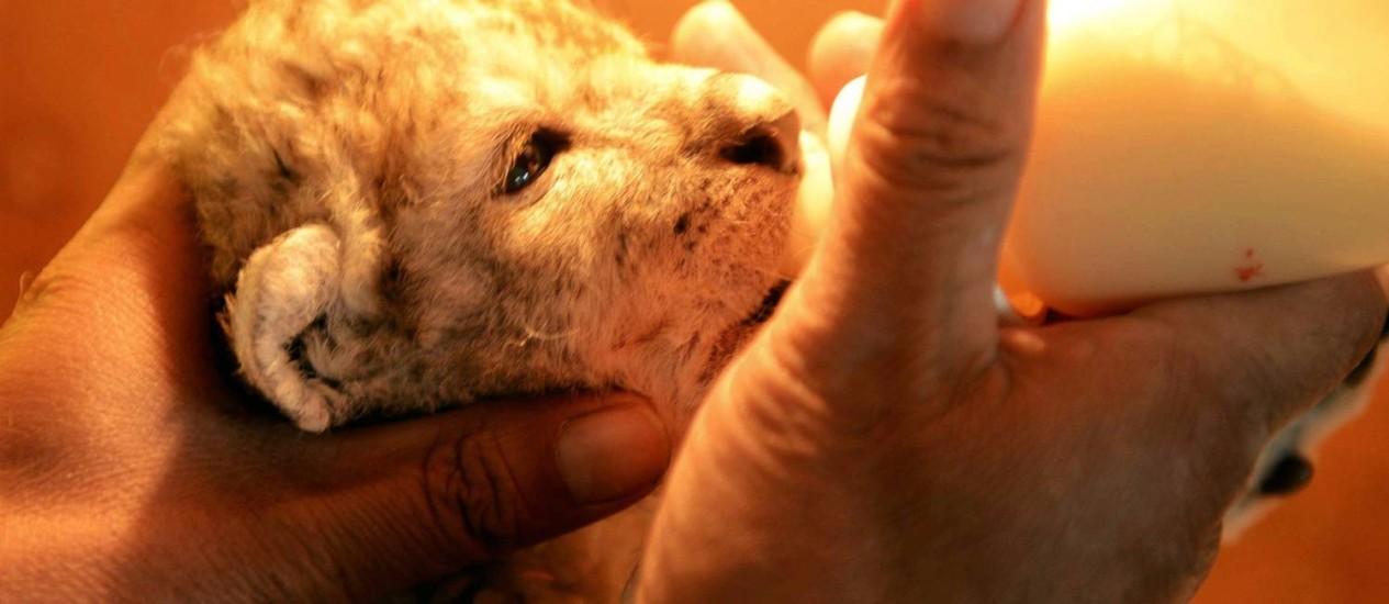 Mamadeira. Um dos cinco filhotes do parque Foto: STR / AFP