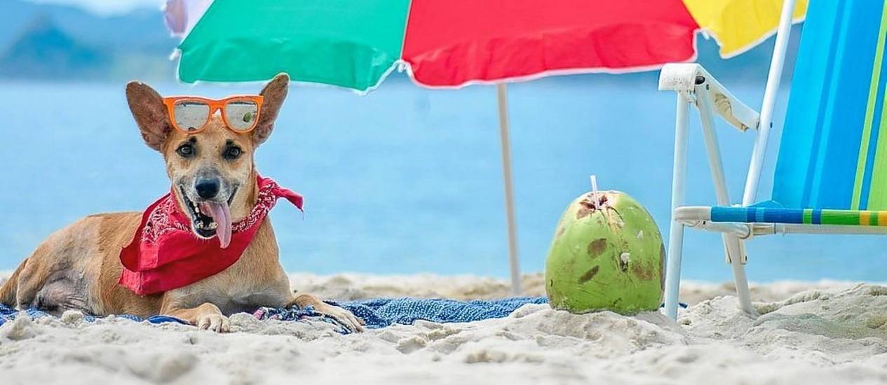 Ensaio praiano. Apolo, todo produzido, em foto do Projeto Cativa, na Praia do Flamengo Foto: Divulgação/ Luana Wirth / divulgação/Luana Wirth