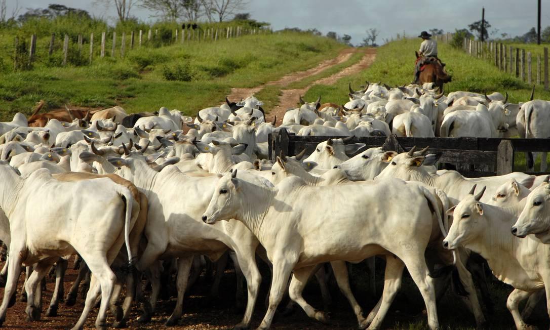 Brasil detecta casos de vaca louca Foto: / Paulo Fridman / BLOOMBERG NEWS / Arquivo