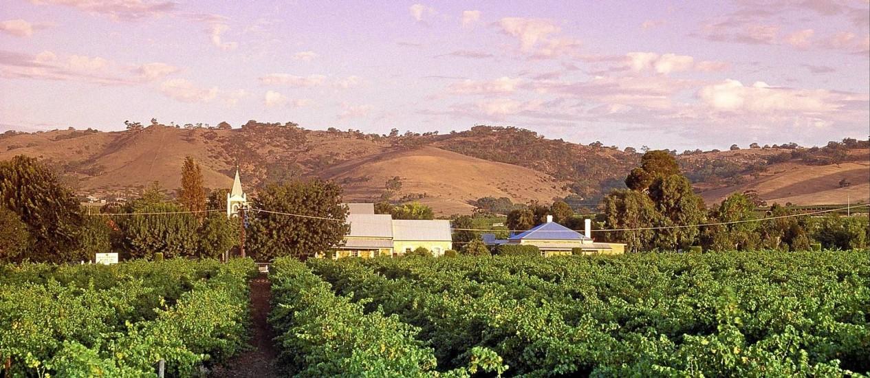 Vinhedos da Bethany, no Barossa Valley Foto: Adam Bruzzone/Tourism Australia