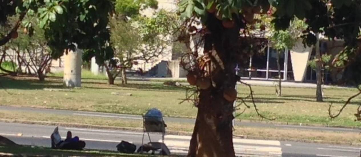 Morador de rua fica próximo ao MAM Foto: Leitor Victor Braga