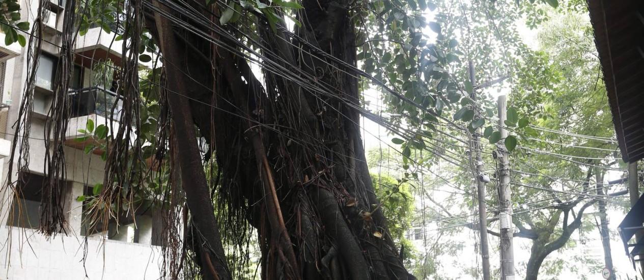 Estrago. A árvore na Rua Custódio Serrão: calçada começa a ceder Foto: Hudson Pontes / Hudson Pontes