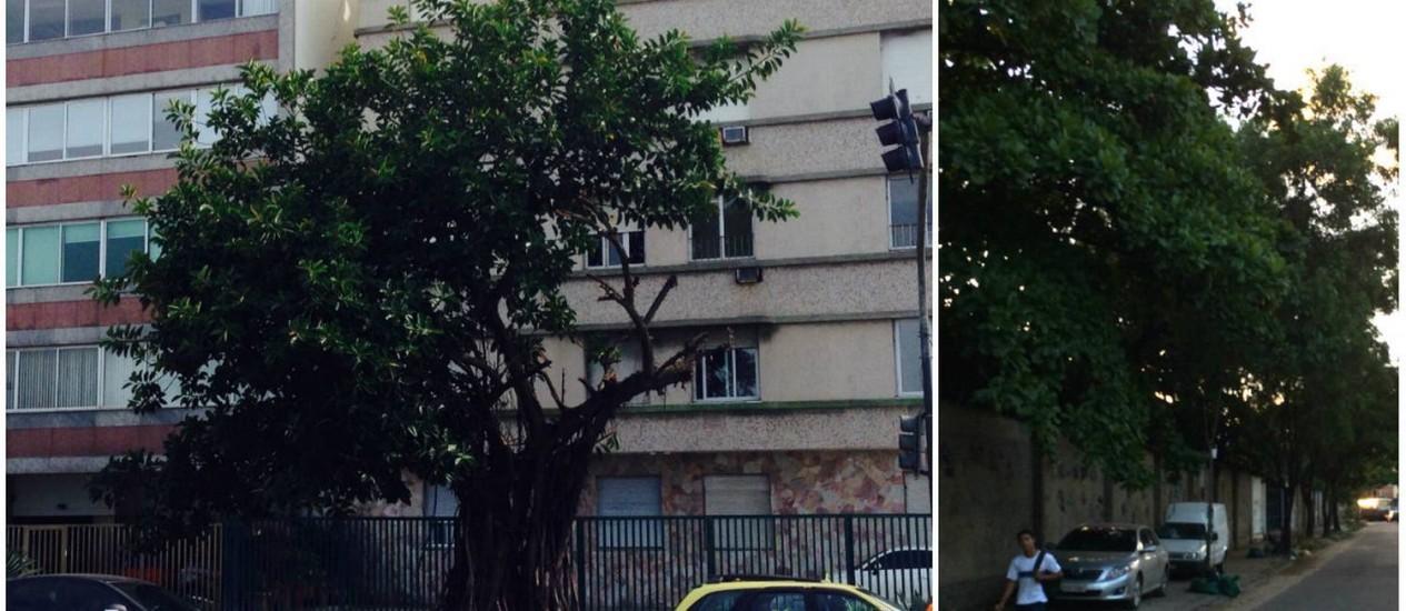 Árvore em Ipanema foi cortada de forma irregular (à esquerda); plantas em Bangu precisam de poda - Foto: Leitores Eileen Andrade e William Lessa / Eu-Repórter
