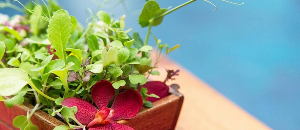 Salada viva, a salada super-fresca no Blue Dragon Restaurant na Big Island, no Havaí Foto: Divulgação