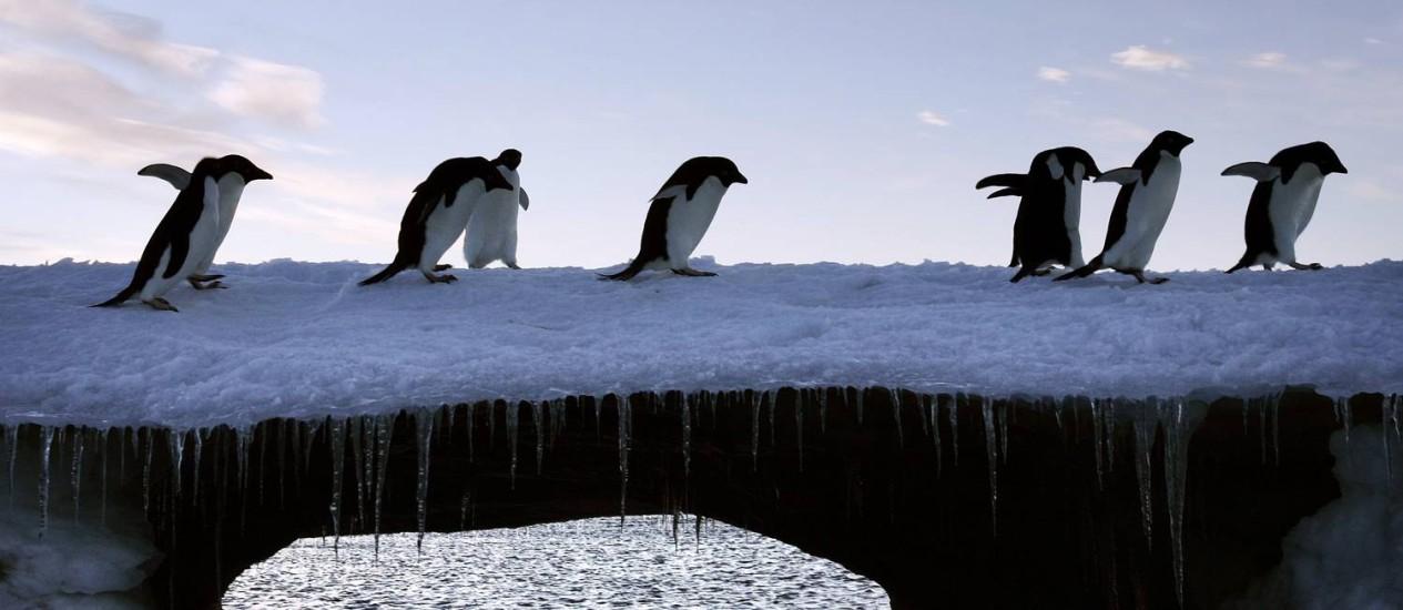 Material genético do vírus da gripe aviária foi encontrado em oito amostras Foto: Pauline Askin/Reuters
