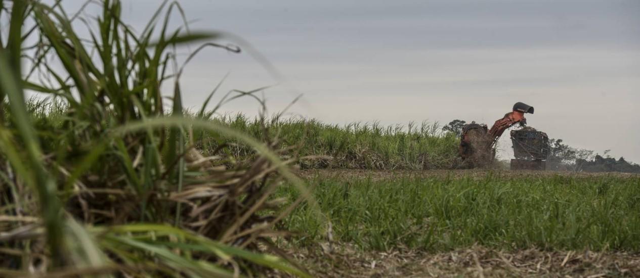 Colheita de cana de açúcar em São José do Rio Preto, em São Paulo Foto: Paulo Fridman / Bloomberg News