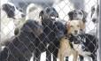A Suipa mantem 3,5 mil animais e quer reaver o título de Utilidade Pública Federal