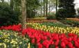 Com sete milhões de flores, o Keukenhof é o maior jardim da Holanda e símbolo da primavera no país