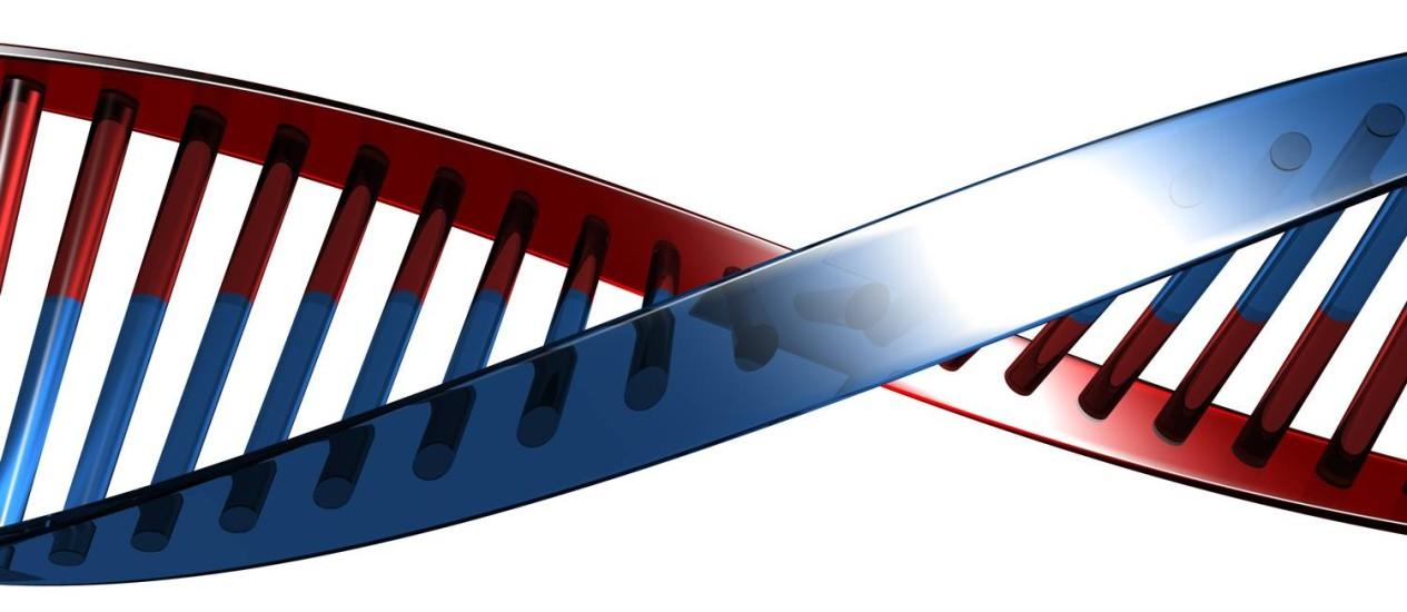 Cadeia de DNA normal, com suas duplas moléculas. No caso artificial, foi adicionada mais um par de moléculas Foto: Stockphoto