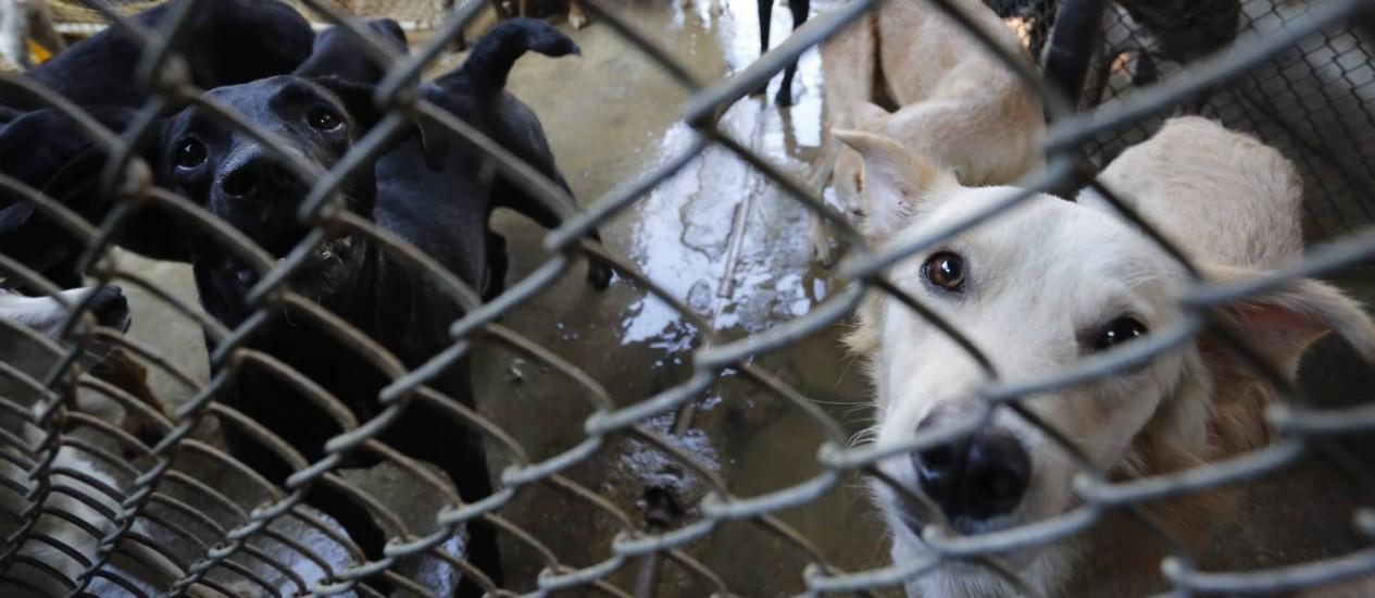 Animais ficam abrigados na Suipa Foto: Pablo Jacob / Agência O Globo