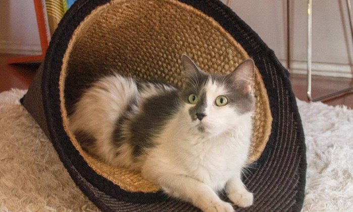 Design de artigos para gatos Foto: Divulgação