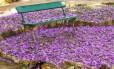 Banquinho cercado por flores caídas de um ipê no Jardim Botânico