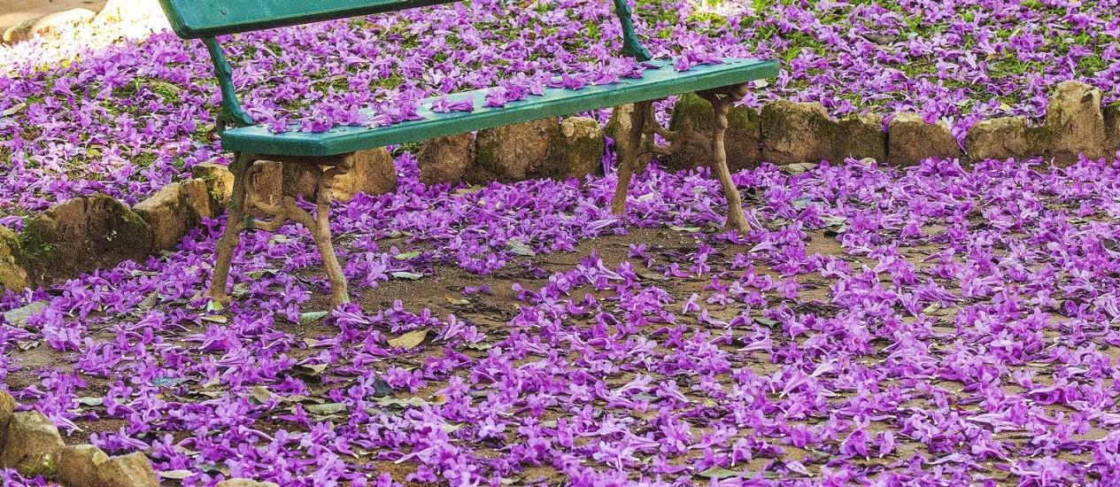 """Jardim Botânico. Banco cercado por flores caídas de um ipê é um dos recantos mostrados no livro """"Parques & Jardins - Refúgios Cariocas"""" Foto: Lena Trindade"""