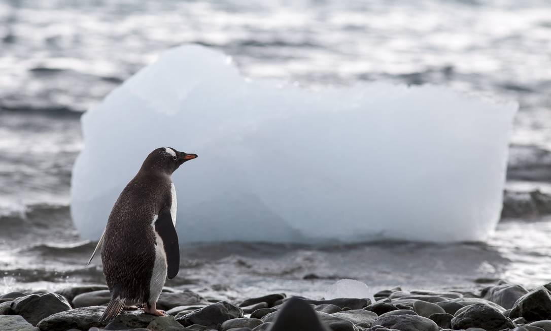 Velocidade do derretimento da Antártida dobrou em três anos Foto: Daniela Dacorso / Agência O Globo
