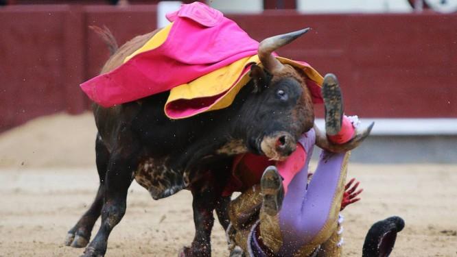 Toureiro espanhol Antonio Nazare é derrubado por touro durante evento na Arena de Las Ventas em Madri. Três toureiros ficaram feridos, obrigando organizadores a cancelar touradas na arena Foto: AFP