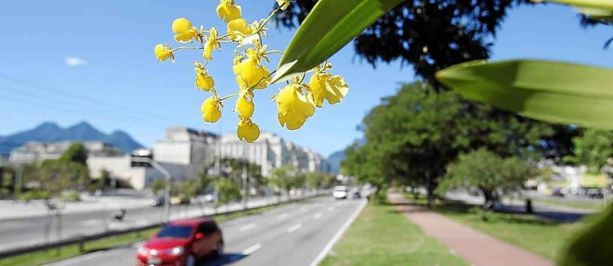 Chuvas-de-ouro: Orquídeas suspensas na Avenida das Américas, perto do VillageMall: início de um projeto que se estenderá pela via Foto: Felipe Hanower