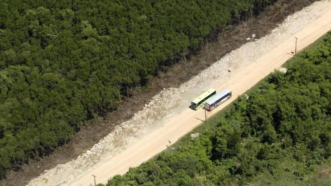 Desmatamento de manguezal na Ilha de Itaoca, em São Gonçalo, para abertura de estrada Foto: Custódio Coimbra