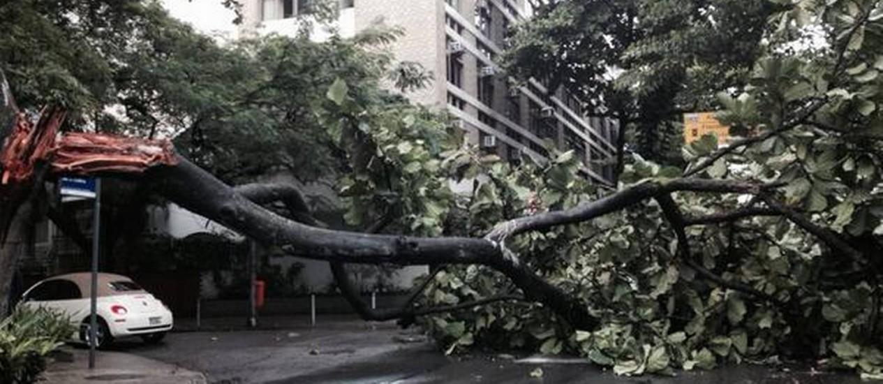 Queda de árvore interdita uma faixa da esquina entre as ruas Barão de Jaguaripe e Maria Quitéria, em Ipanema Foto: @UmaChefemcasa / Divulgação