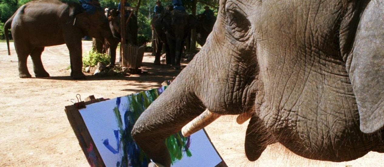 """Um elefante de quatro anos usa a tromba para """"pintar"""" um quadro: neurônios concentrados no cerebelo Foto: AP"""