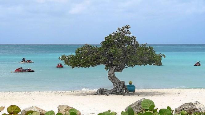 Em Aruba, a árvore divi-divi, um símbolo da ilha Foto: Raquel Cordeiro / O Globo