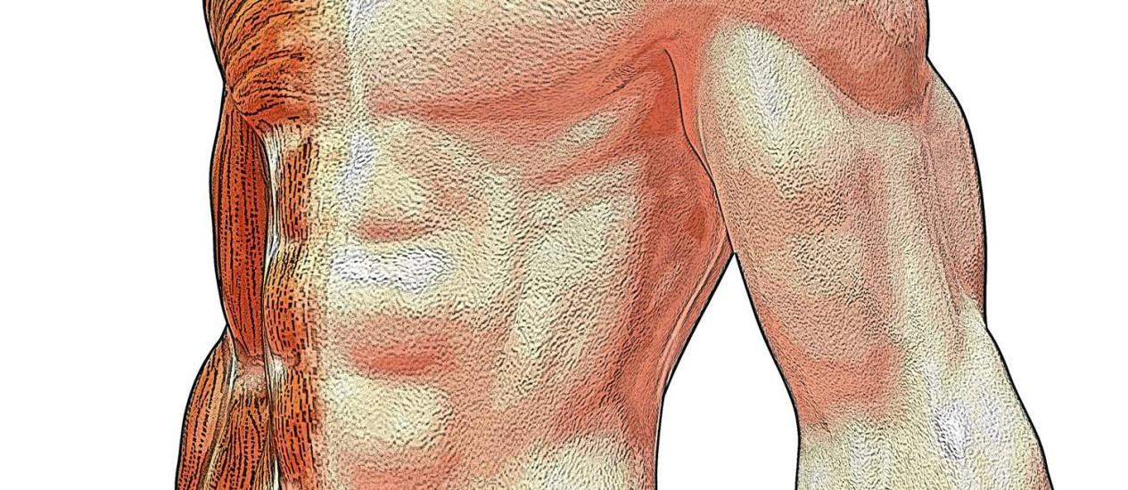Músculo humano acumula 10 vezes mais alterações metabólicas que os chimpanzés Foto: Divulgação