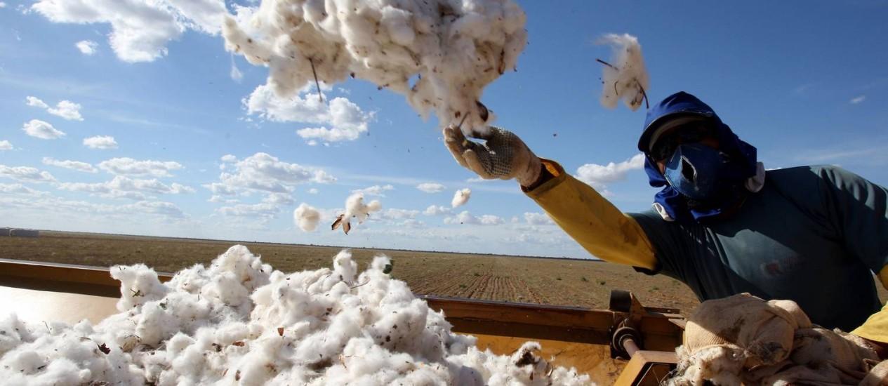 Trabalhador em fazenda de algodão em Luis Eduardo Magalhães, na Bahia Foto: Adriano Machado / O Globo
