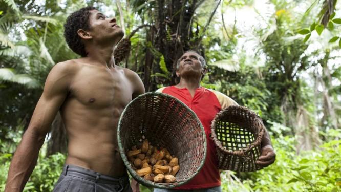 Extrativistas em Moju, no Pará: troca de conhecimento com comunidades tradicionais Foto: Divulgação/Natura