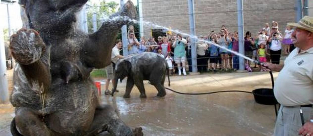 Hora do banho: o tratador Daryl Hoffman cuida do bem-estar de Tess Foto: Reprodução
