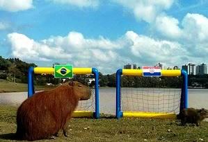 Paul é a capivara vidente lançada pela prefeitura de Curitiba Foto: Reprodução internet