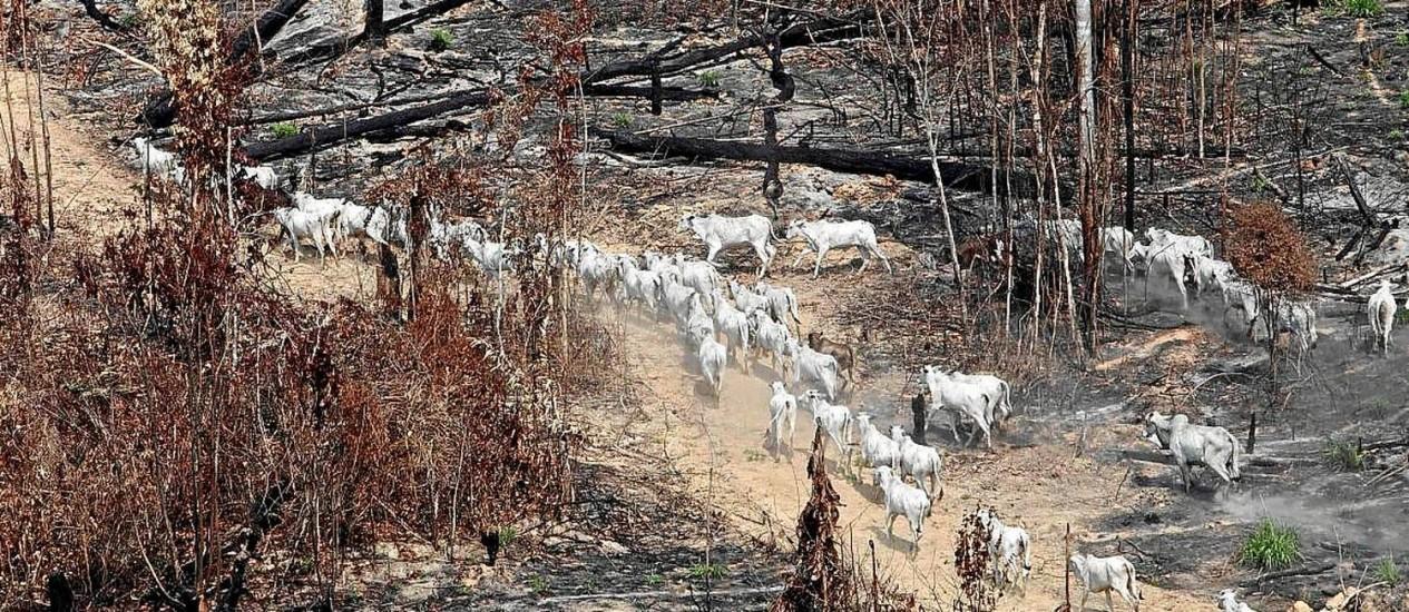 Devastação em Novo Progresso, no interior do Pará, para a abertura de áreas de criação de gado de corte Foto: Andre Penner/AP