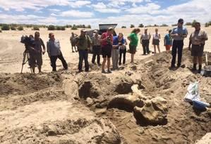 Fotógrafos registram escavações de fóssil de mastodonte no Novo México Foto: Museu de História Natural e Ciência do Novo México / Divulgação