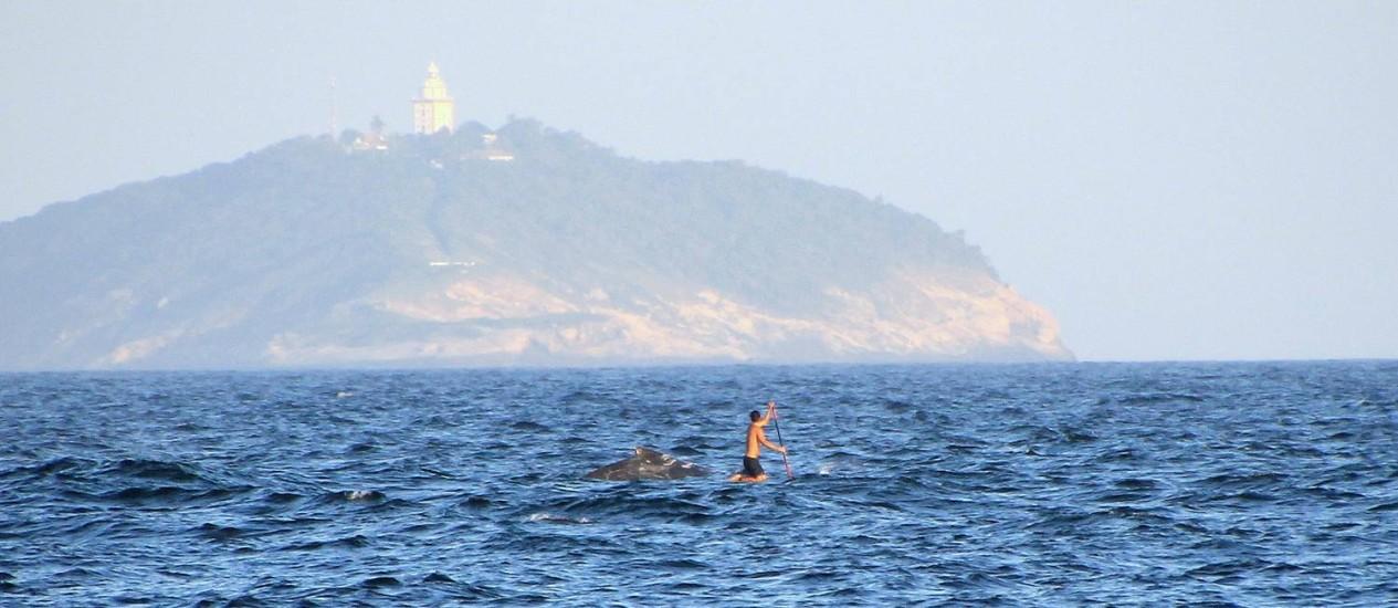 Ambientalista usa prancha de stand up paddle para seguir baleia jubarte em Ipanema Foto: Bruno Barreto