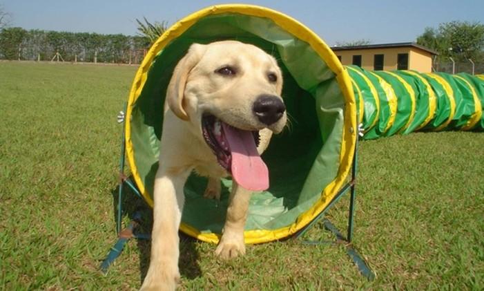 Para quem mora em apartamento, os hotéis para cães são uma opção para evitar transtornos no dia de receber os amigos para a Copa Foto: Divulgação
