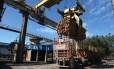 Fibria: fabricante de celulose está sob investigação do Ministério Público Foto: Rich Press / Bloomberg