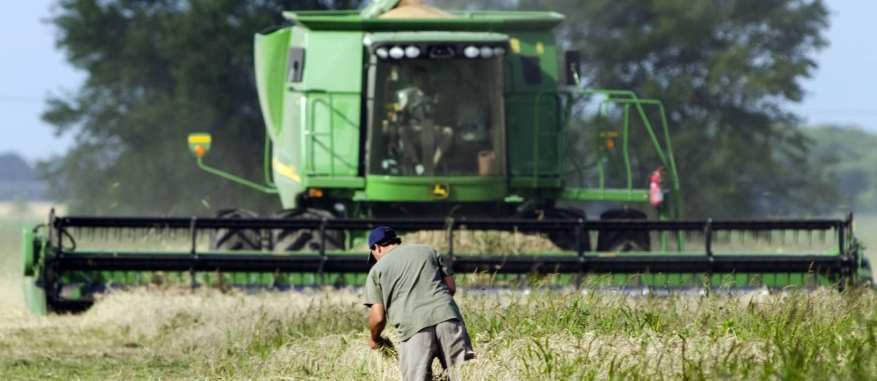 Salvação da lavoura: Cristina Kirchner esperava que a safra de trigo ajudasse a reforçar reservas cambiais Foto: Diego Giudice/Bloomberg