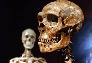 Reconstrução de crânio a partir de pedaços encontrados permite entender características dos Neandertais Foto: Frank Franklin II / AP