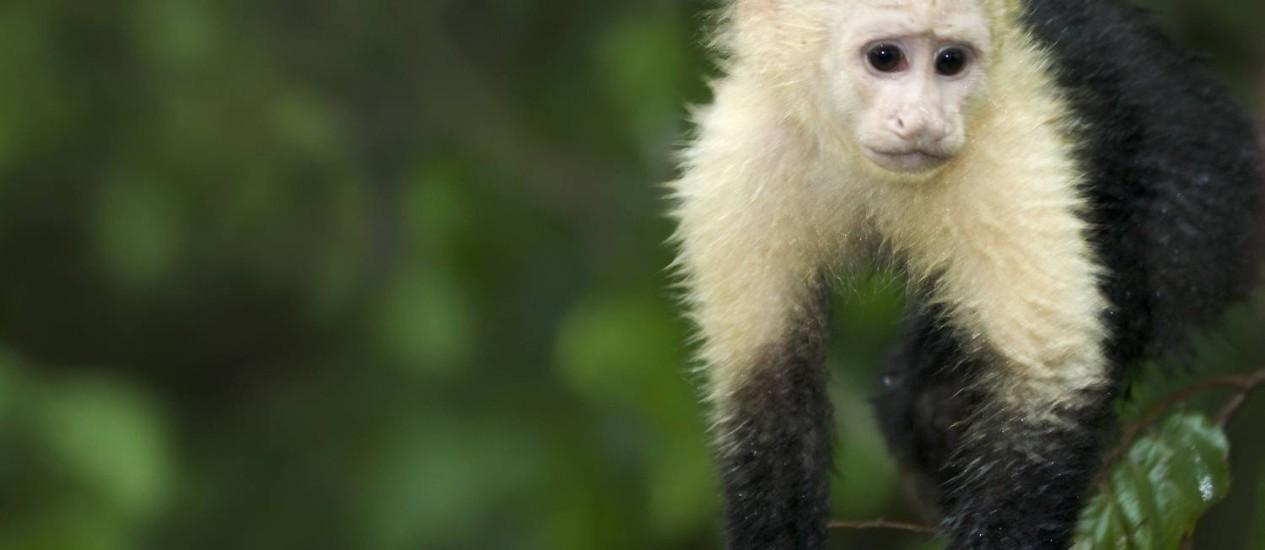 Animais poderão servir de cobaias para teste de drogas contra a doença Foto: Agência O Globo