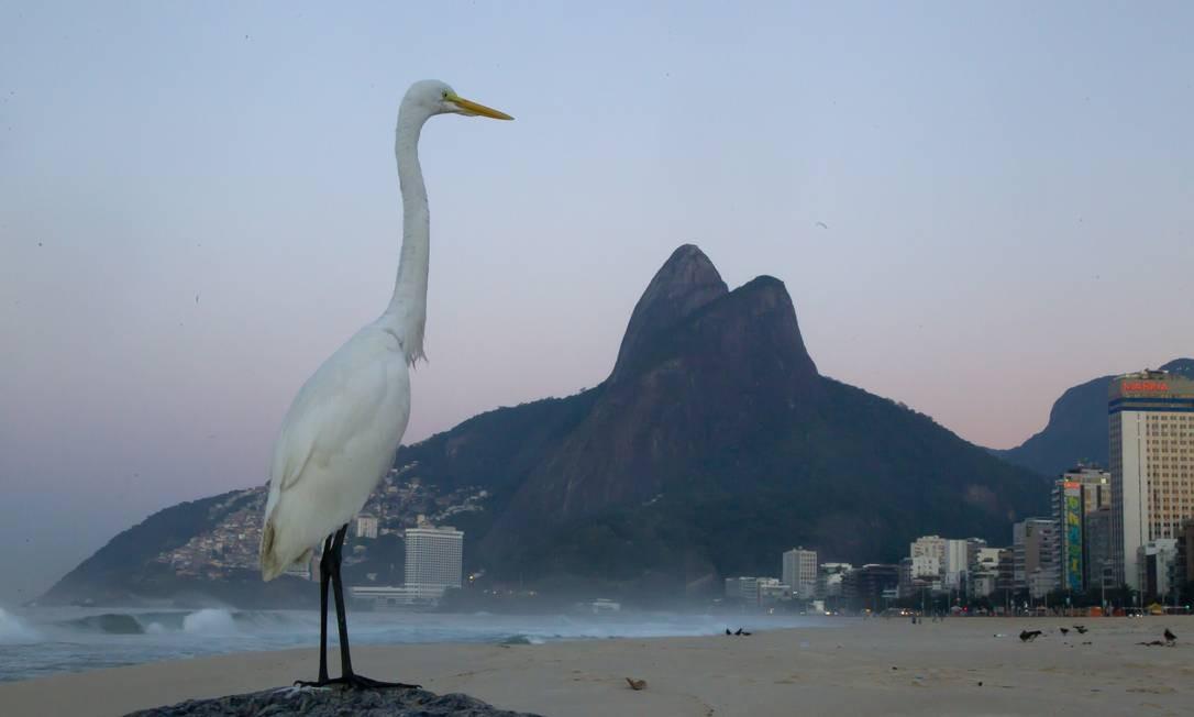 Praia do Leblon com névoa ao amanhecer: rigoroso inverno inspirou música Foto: Fernando Quevedo / Agência O Globo