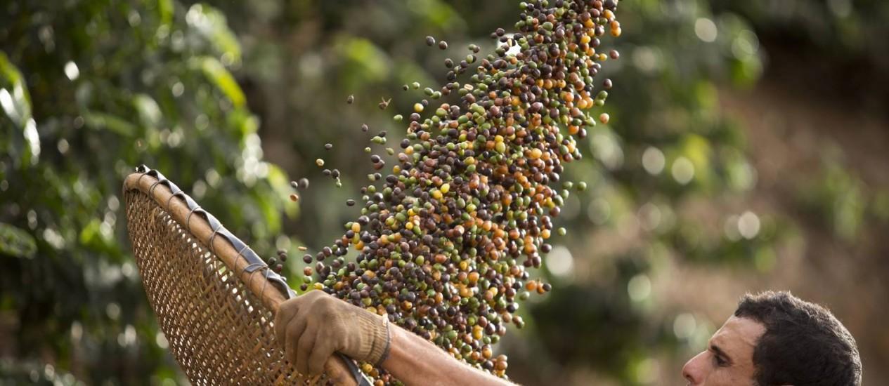 Pequeno produtor em Varre-Sai, Noroeste Fluminense Foto: Márcia Foletto / Agência O Globo