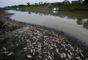 Toneladas de peixes às margens do Rio Solimões devido ao baixo nível de água causado pelo El Niño em novembro de 2009 Foto: ANTONIO SCORZA / AFP