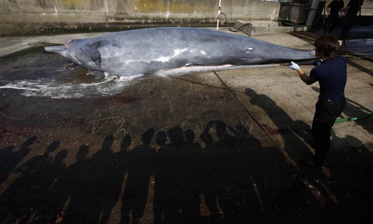 Está será a primeira temporada de caça, desde que o Tribunal Internacional de Justiça interrompeu a ação de um navio baleeiro japonês na Antártida, em março deste ano Foto: ISSEI KATO / REUTERS