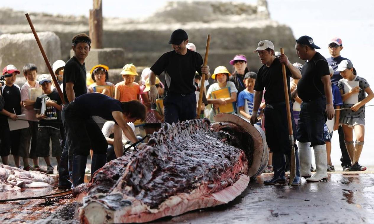 Evento anual acontece em Wada com objetivo perpetuar a tradição de captura desses animais na região Foto: ISSEI KATO / REUTERS